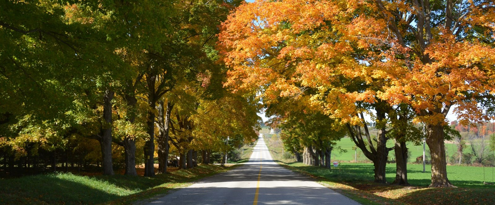 fall tree lined country sideroad in Mapleton township