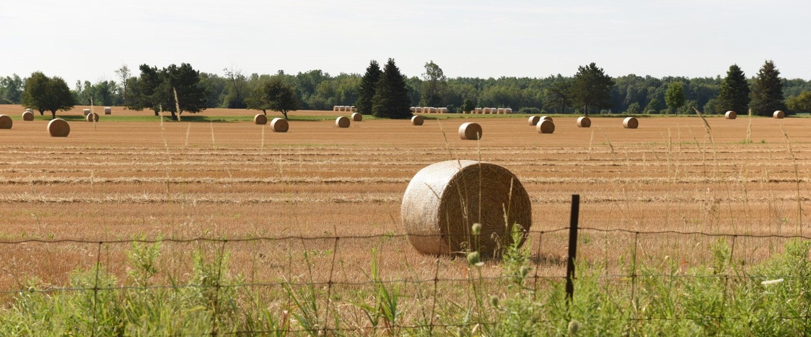 field with round hay bales