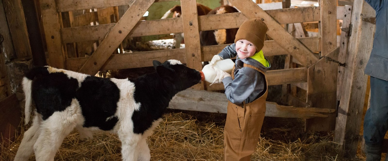 boy feeding calf a bottle of milk