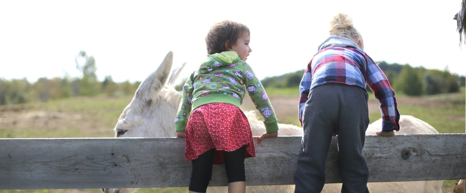 two children standing on a fence