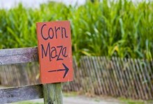 corn maze sign in front of field