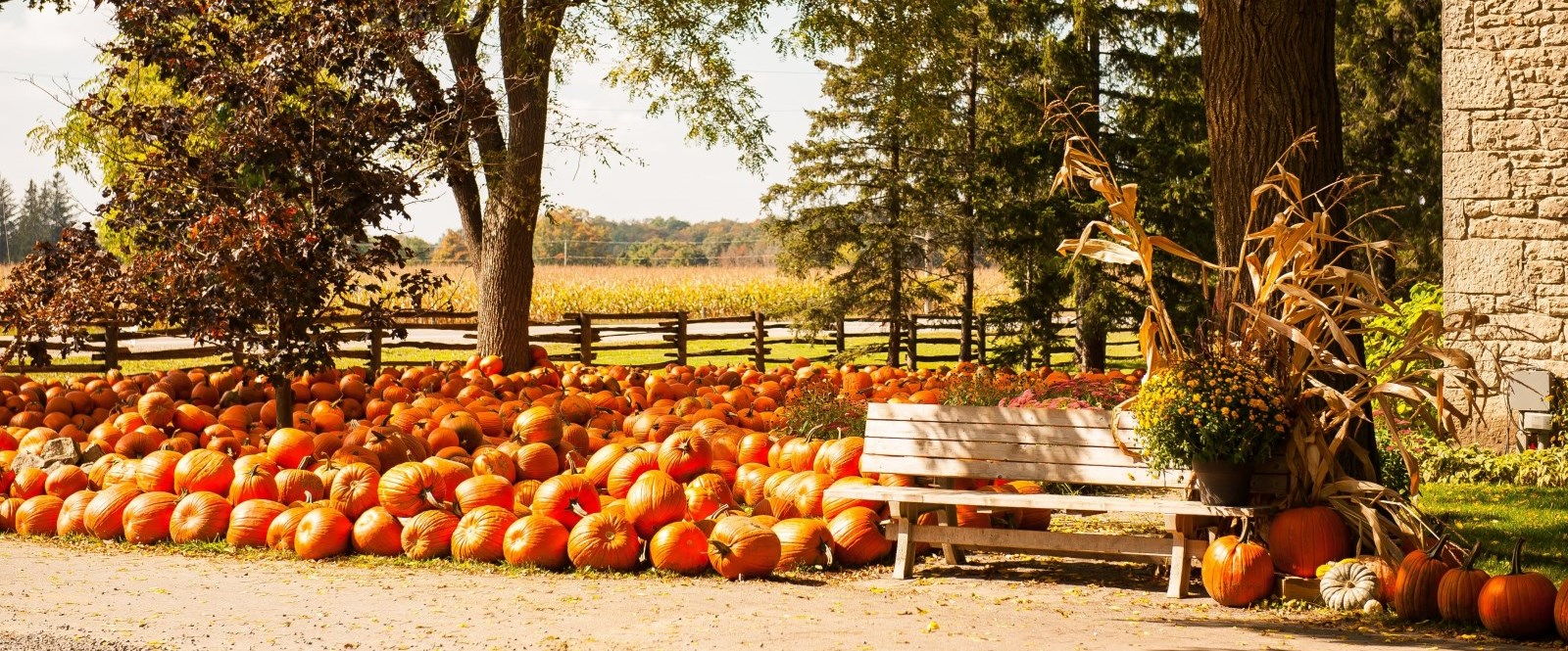 a pile of pumpkins on a farm house front lawn