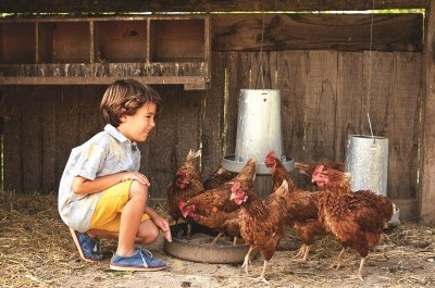 boy kneeling with chickens