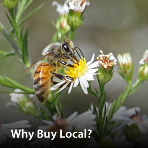 Visit our Why Buy Local page