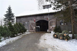 christmas trees outside barn with doors open