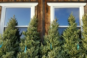 evergreen trees leaning against a window