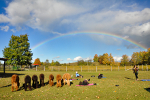 scenic view of people doing yoga with alpacs and a rainbow behind