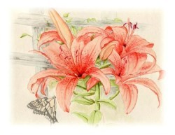 watercolour painting of lilly flower