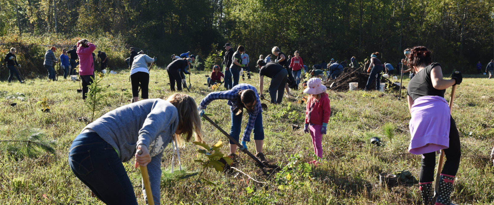 people planting trees in a field